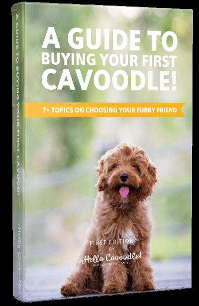 Hello Cavoodle! eBook