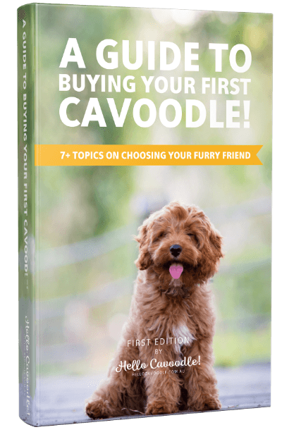 Hello Cavoodle! eBook