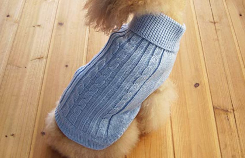 blue sweater on dog
