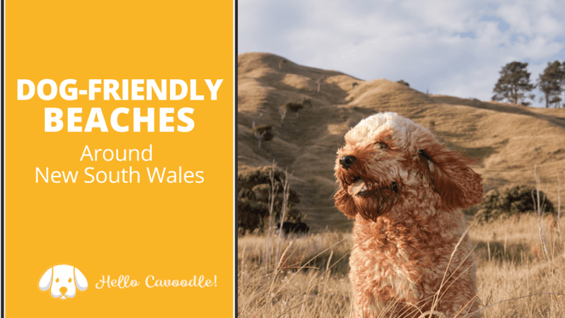 dog friendly beaches new south wales
