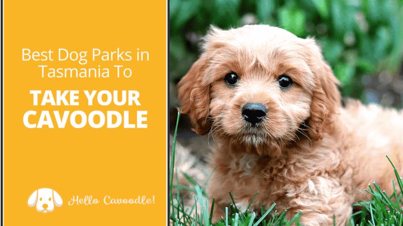 dog parks tasmania