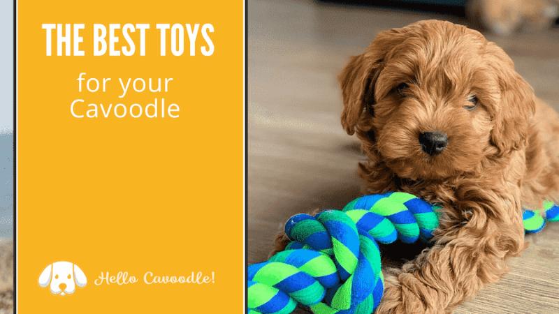 best toys cavoodle