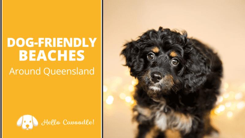 dog friendly beaches queensland