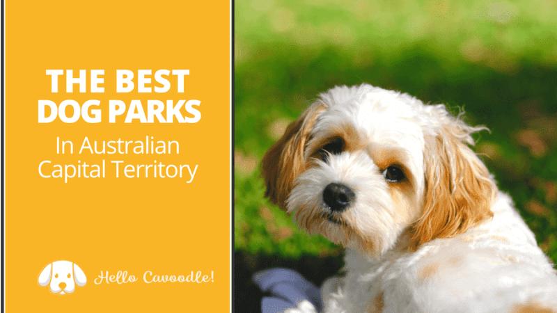 dog parks australian capital territory