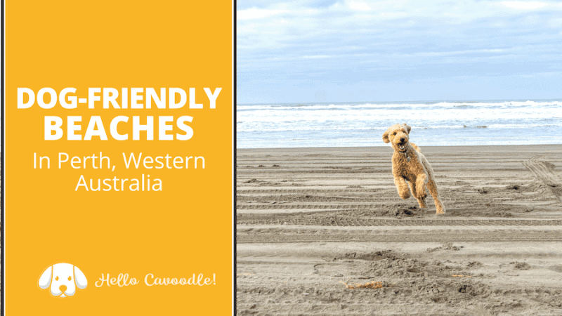 dog friendly beaches perth