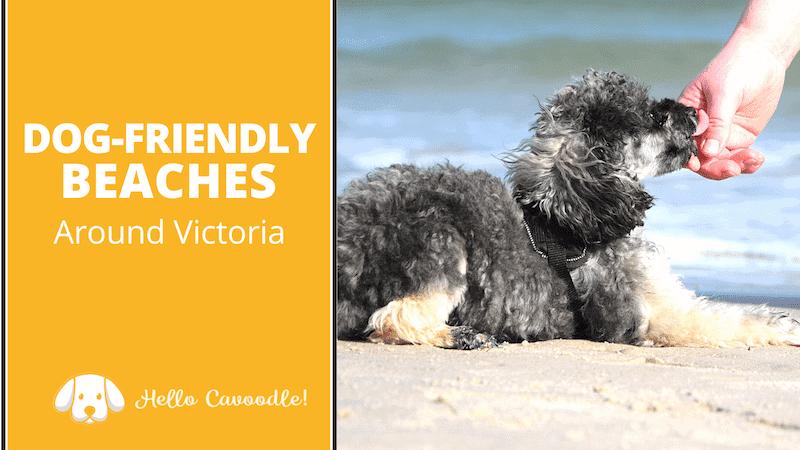 dog friendly beaches around victoria