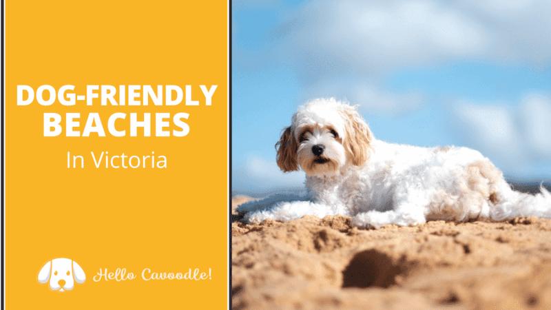 dog friendly beaches in victoria