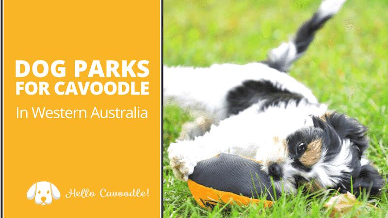 dog parks western australia