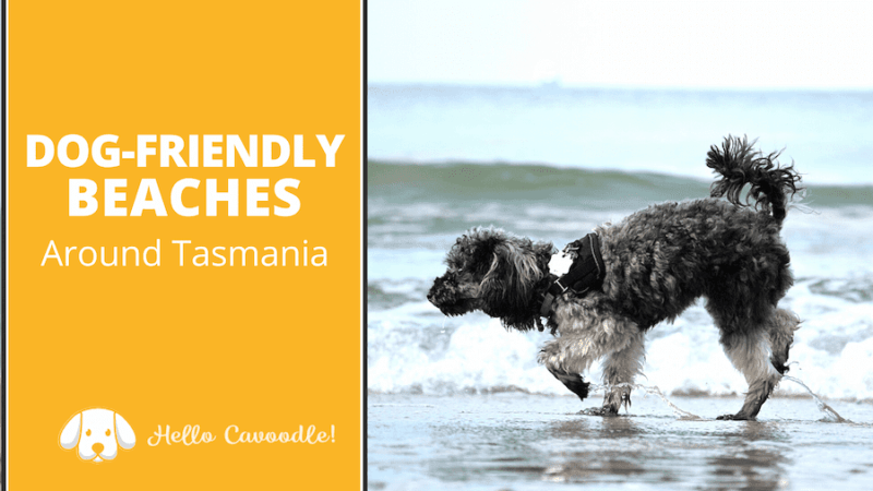 dog friendly beaches tasmania
