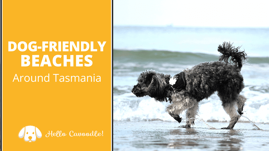 dog friendly beaches tasmania
