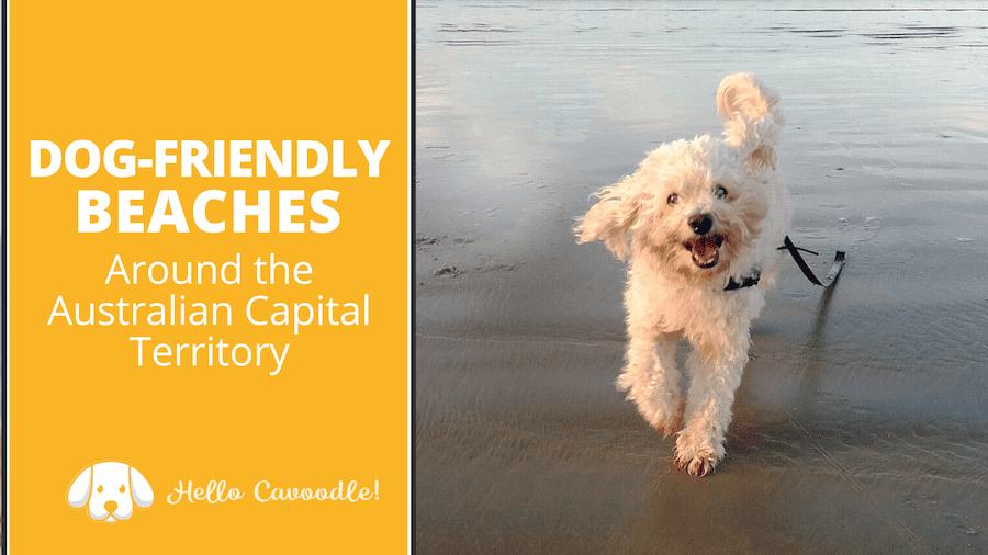 dog friendly beaches australia