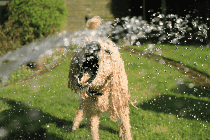 Dog Opens Mouth at Water