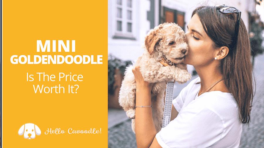 mini goldendoodle price