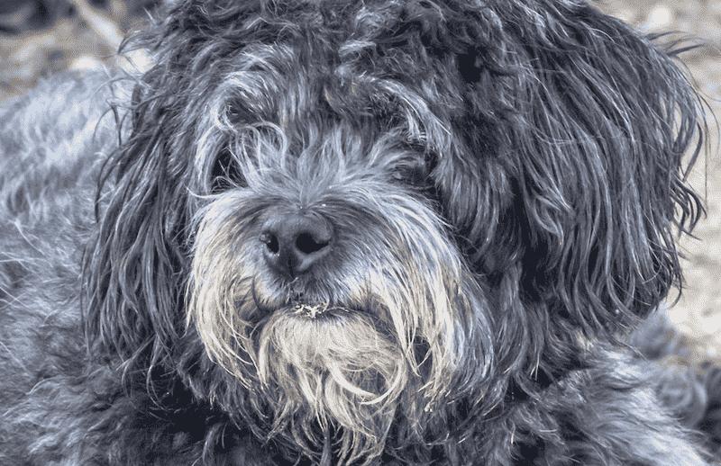 Mistreated Dog