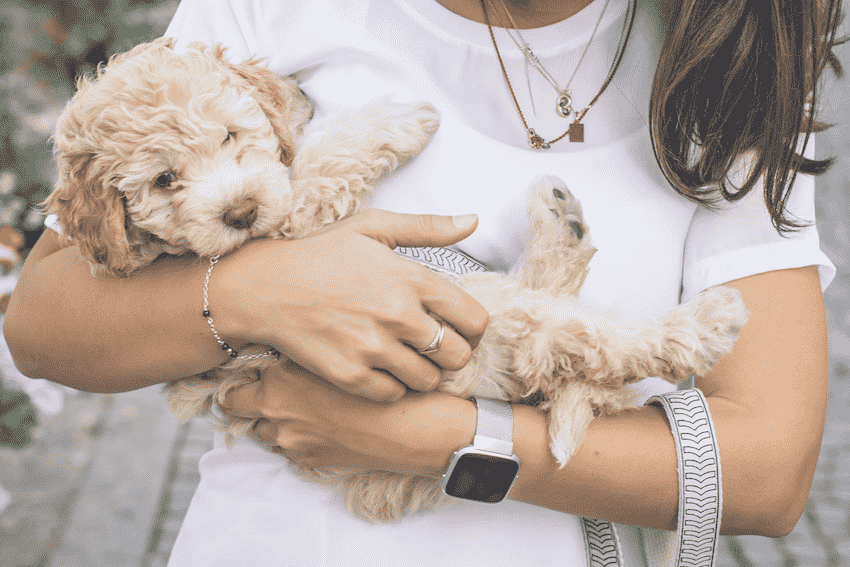 A Woman Holding a Puppy