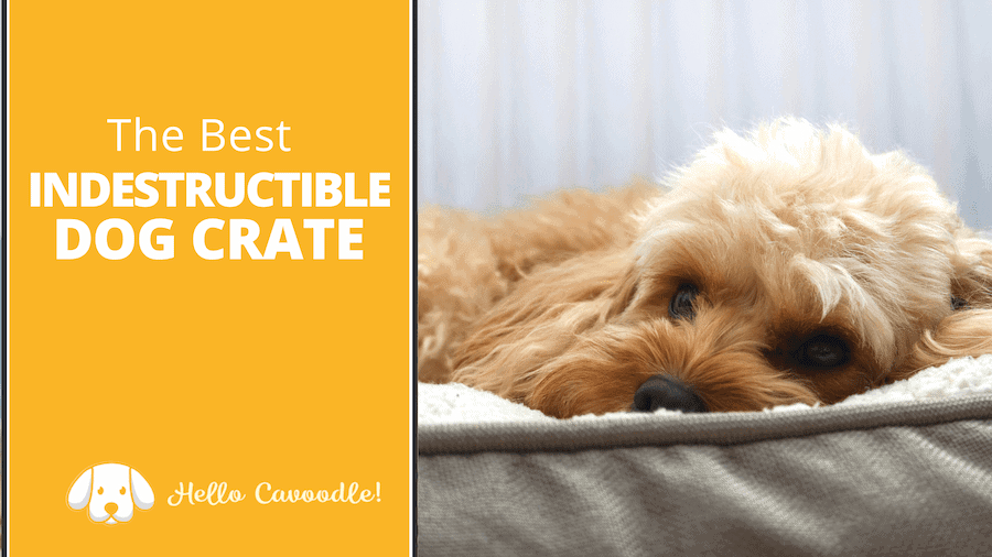 best indestructible dog crate