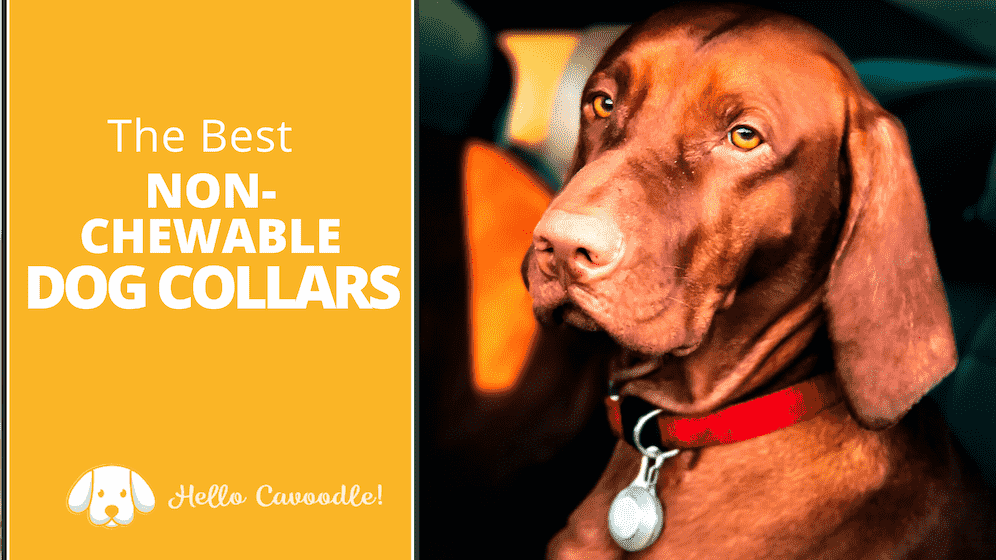 best non-chewable dog collars
