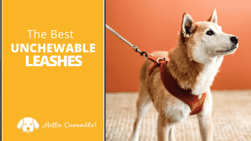 best unchewable dog leash