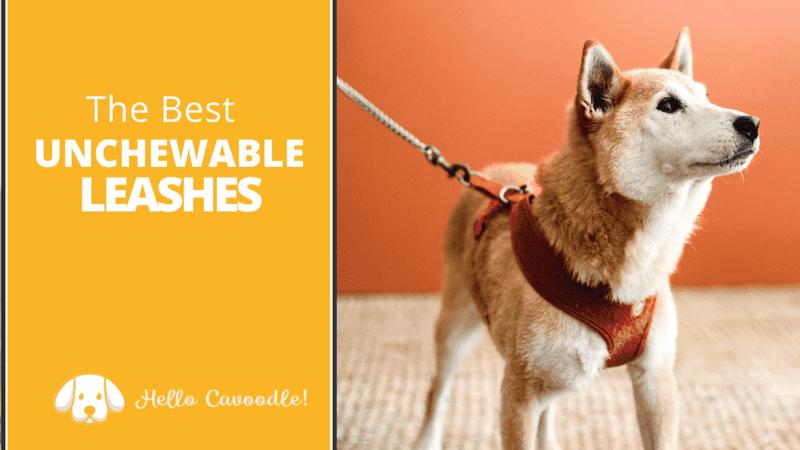 best unchewable dog leash