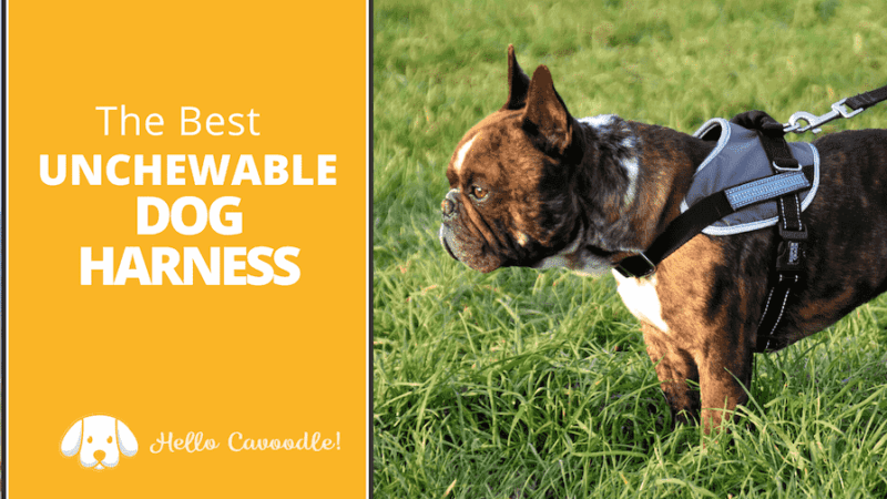 best indestructible dog harness
